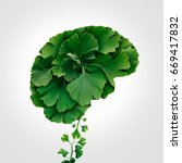 ginkgo biloba brain as a herbal ... | Shutterstock . vector #669417832