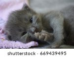 cat and kitten | Shutterstock . vector #669439495