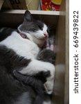 cat and kitten | Shutterstock . vector #669439822