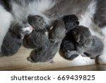cat and kitten | Shutterstock . vector #669439825
