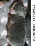 cat and kitten | Shutterstock . vector #669439828