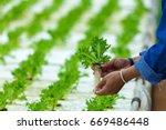 Hydroponics Organic Fresh...