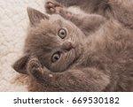 Stock photo grey british kitten 669530182