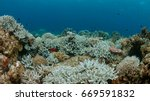 coral bleaching occurs when sea ... | Shutterstock . vector #669591832