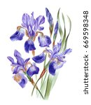 watercolor hand painted iris... | Shutterstock . vector #669598348