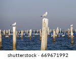 Seagulls Perching On Wooden...