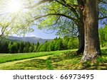 Spring Landscape In The...