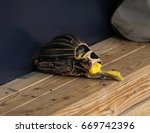 Baseball Fielder's Glove On A...