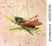 grasshopper with red lags ... | Shutterstock . vector #669813256
