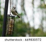 bird relaxing on a suet bird... | Shutterstock . vector #669830572