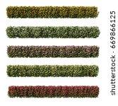 3d Rendering Of Euphorbia Milii
