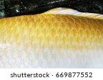 scales fish carp.close up skin... | Shutterstock . vector #669877552