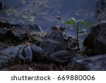 Frog Sitting Beside A Pond Wit...