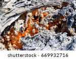 burnt wood ashes | Shutterstock . vector #669932716