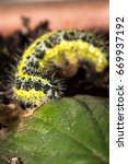 green and yellow hairy spotted... | Shutterstock . vector #669937192