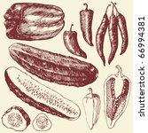 vegetable set   hand drawn... | Shutterstock .eps vector #66994381