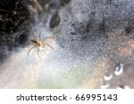 Spider in the nest - stock photo