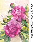 violet peonies. drawing on raw... | Shutterstock . vector #669952552