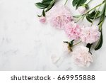 beautiful pink peony flowers on ... | Shutterstock . vector #669955888