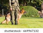 police dog on the grass.... | Shutterstock . vector #669967132