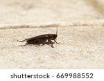 american cockroach sitting on a ... | Shutterstock . vector #669988552