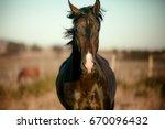 stallion | Shutterstock . vector #670096432