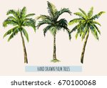 Stock vector beautiful hand drawn botanical vector illustration with palm trees isolated on white background 670100068