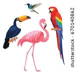exotic tropical birds  ... | Shutterstock .eps vector #670140862