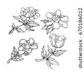hand drawn vintage floral... | Shutterstock .eps vector #670186012