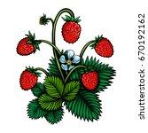vector color wild strawberries... | Shutterstock .eps vector #670192162