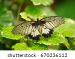 Butterfly Sitting On Leaf....