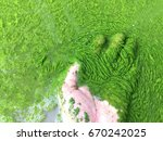 harmful algae bloom un an... | Shutterstock . vector #670242025