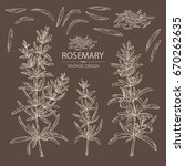 collection of rosemary. vector... | Shutterstock .eps vector #670262635