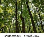 black rat snake in tall tree | Shutterstock . vector #670368562