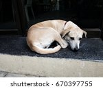 dog and sad face expression | Shutterstock . vector #670397755