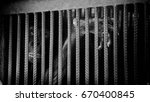 chimps are trapped in... | Shutterstock . vector #670400845