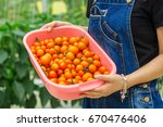 organic tomatoes in basket.... | Shutterstock . vector #670476406