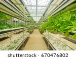 modern agriculture of vegetable ... | Shutterstock . vector #670476802