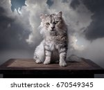 Stock photo a grey fluffy cat sits on its hind legs and looks angry background grey clouds 670549345