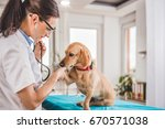 Stock photo young female veterinarian checking up the dog at the veterinarian clinic 670571038