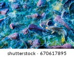 group of fish in lake  thailand. | Shutterstock . vector #670617895