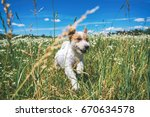 Stock photo happy dog running outdoors on a sunny day 670634578