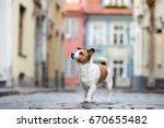 jack russell terrier dog... | Shutterstock . vector #670655482