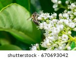 bees flying and collecting food ... | Shutterstock . vector #670693042