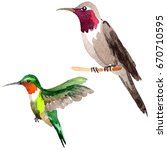 sky bird colibri in a wildlife... | Shutterstock . vector #670710595