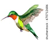 sky bird colibri in a wildlife... | Shutterstock . vector #670712686
