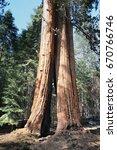 california   national forest... | Shutterstock . vector #670766746