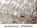 Palm Crust Background  Macro