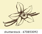 flower of vanilla | Shutterstock .eps vector #670853092