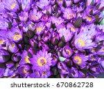 purple flowers background.... | Shutterstock . vector #670862728